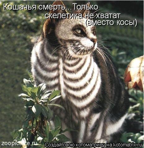 Котоматрица: Кошачья смерть...Только  скелетика не хватат (вместо косы)