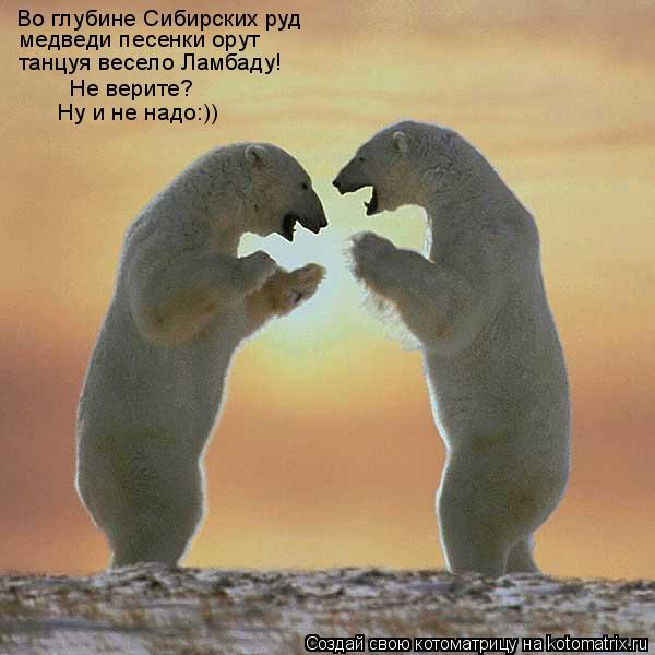 Котоматрица: Во глубине Сибирских руд медведи песенки орут танцуя весело Ламбаду! Не верите? Ну и не надо:))
