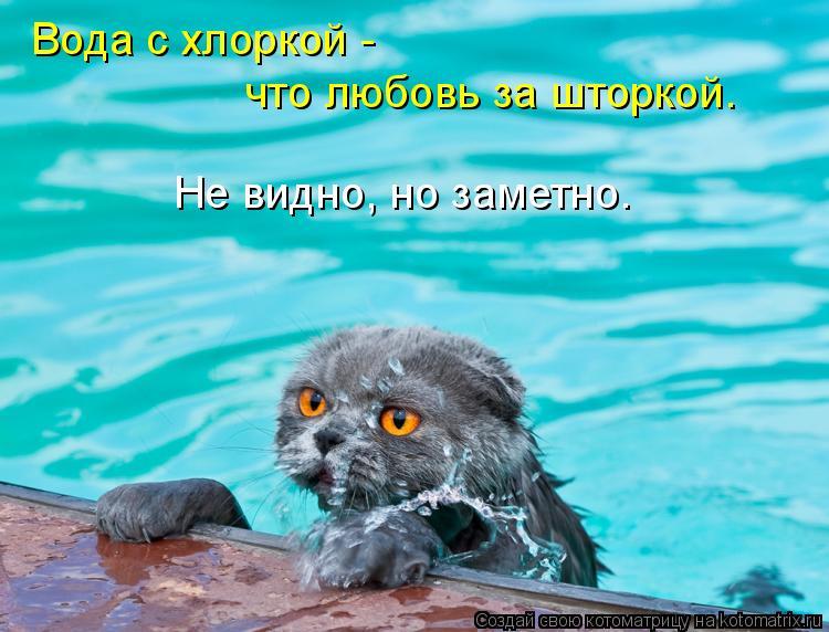Котоматрица: Вода с хлоркой -  что любовь за шторкой. Не видно, но заметно.