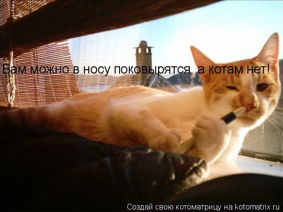 Котоматрица: Вам можно в носу поковырятся, а котам нет!