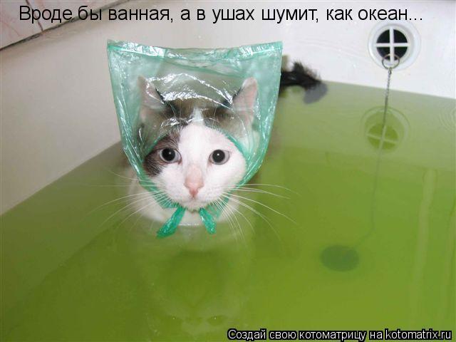Котоматрица: Вроде бы ванная, а в ушах шумит, как океан...