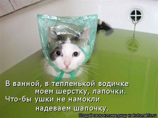 Котоматрица: В ванной, в тепленькой водичке  Что-бы ушки не намокли надеваем шапочку. моем шерстку, лапочки.