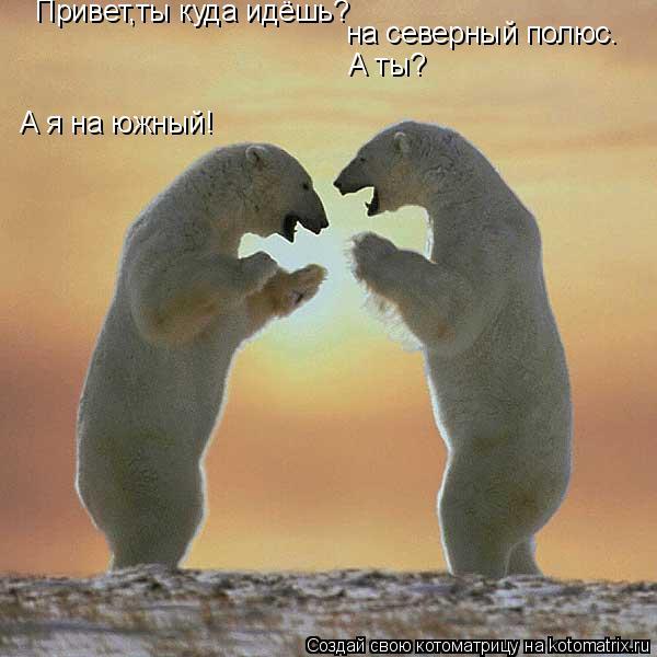 Котоматрица: А я на южный! Привет,ты куда идёшь?        на северный полюс.  А ты?