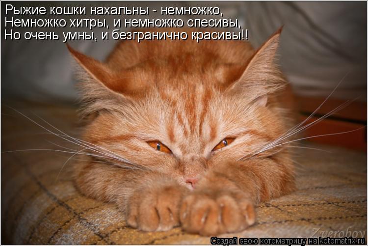 Котоматрица: Рыжие кошки нахальны - немножко, Немножко хитры, и немножко спесивы, Но очень умны, и безгранично красивы!!