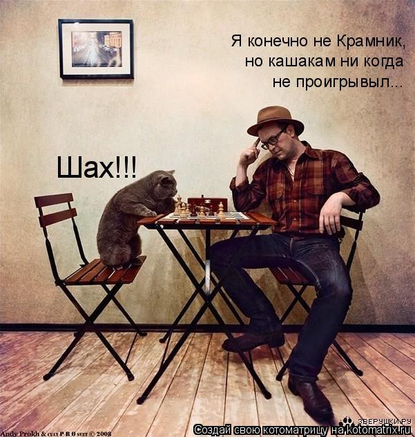 Котоматрица: Шах!!! Я конечно не Крамник, но кашакам ни когда не проигрывыл...