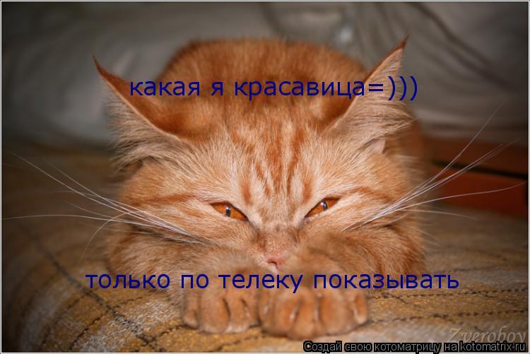 Котоматрица: какая я красавица=))) только по телеку показывать