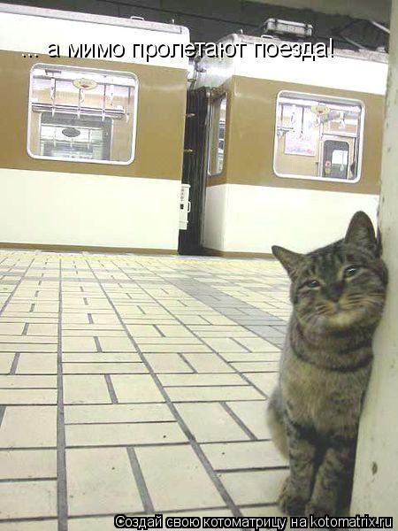 Котоматрица: ... а мимо пролетают поезда!
