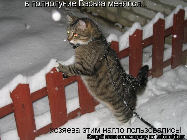 Котоматрица: в полнолуние Васька менялся... хозяева этим нагло пользовались!