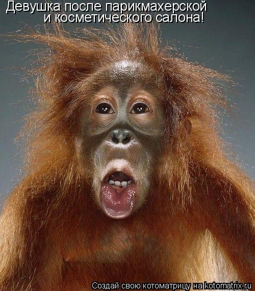 Котоматрица: Девушка после парикмахерской и косметического салона!