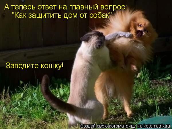 """Котоматрица: А теперь ответ на главный вопрос:  """"Как защитить дом от собак"""" Заведите кошку!"""