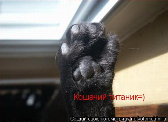 Котоматрица: Кошачий титаник=)