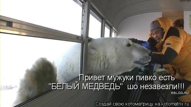 """Котоматрица: Привет мужуки пивко есть """"БЕЛЫЙ МЕДВЕДЬ""""  шо незавезли!!!"""