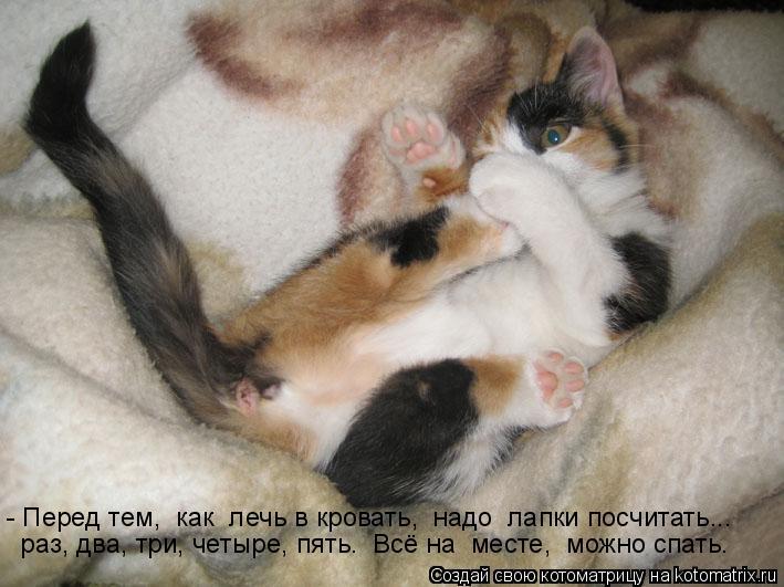 Котоматрица: - Перед тем,  как  лечь в кровать,  надо  лапки посчитать...  раз, два, три, четыре, пять.  Всё на  месте,  можно спать.