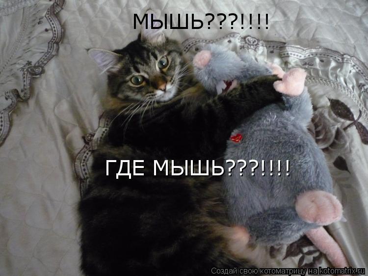 Котоматрица: МЫШЬ???!!!! ГДЕ МЫШЬ???!!!!