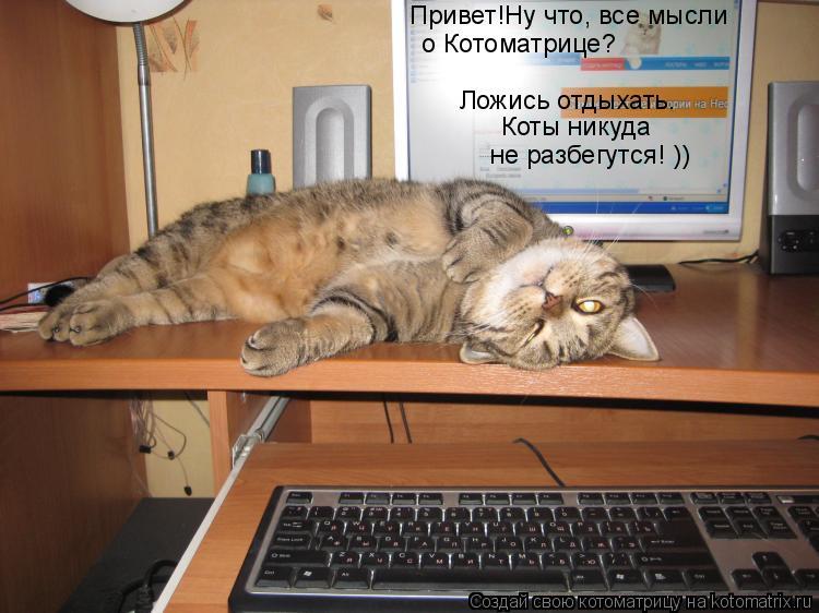 Котоматрица: Коты никуда  Привет!Ну что, все мысли  о Котоматрице? не разбегутся! )) Ложись отдыхать.