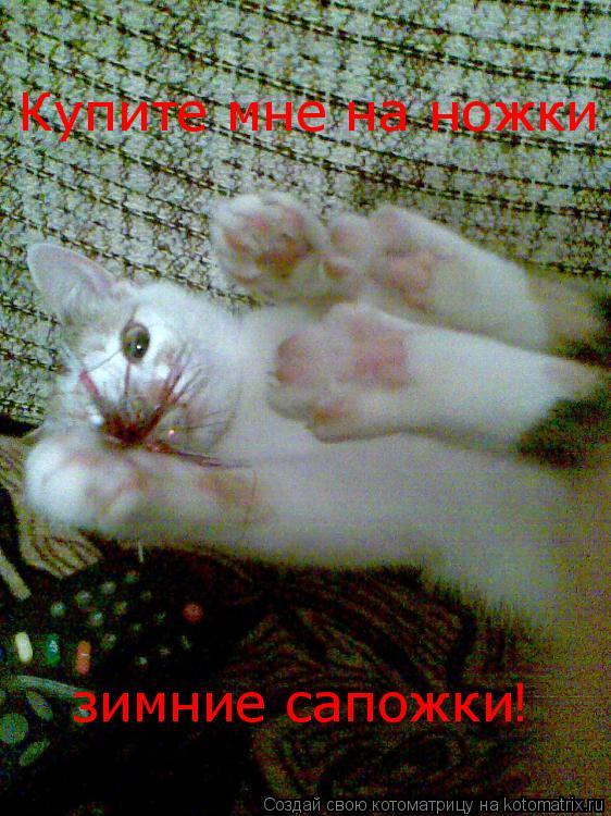 Котоматрица: Купите мне на ножки зимние сапожки !