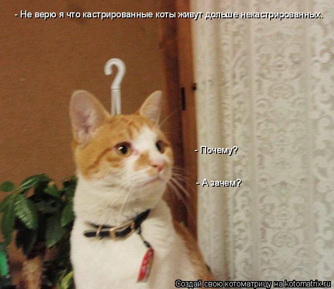 Котоматрица: - Не верю я что кастрированные коты живут дольше некастрированных. - Почему? - А зачем?