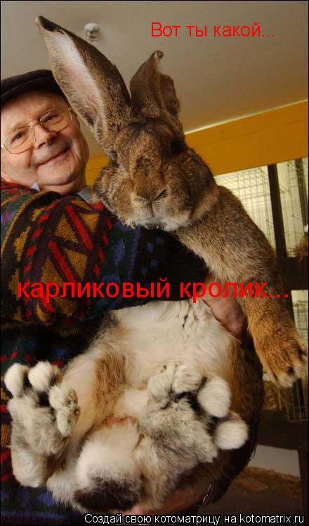 Котоматрица: Вот ты какой...  карликовый кролик...