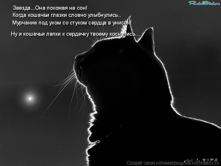Котоматрица: Звезда...Она похожая на сон! Когда кошачьи глазки словно улыбнулись.. Мурчание под ухом со стуком сердца в унисон! Ну и кошачьи лапки к сердеч