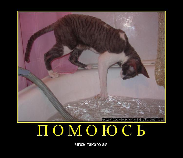 Котоматрица: помоюсь чтож такого а?