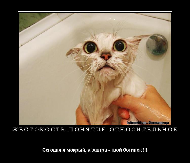 Котоматрица: ЖЕСТОКОСТЬ-ПОНЯТИЕ ОТНОСИТЕЛЬНОЕ Сегодня я мокрый, а завтра - твой ботинок !!!