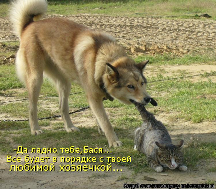Котоматрица: -Да ладно тебе,Бася... Все будет в порядке с твоей любимой хозяечкой...