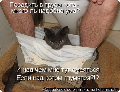 Котоматрица: Посадить в трусы кота- много ль надобно ума? И над чем мне тут смеяться, Если над котом глумятся?!?
