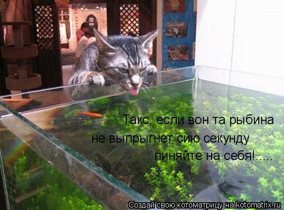 Котоматрица: Такс, если вон та рыбина не выпрыгнет сию секунду не выпрыгнет сию секунду пиняйте на себя!..... пиняйте на себя!.....
