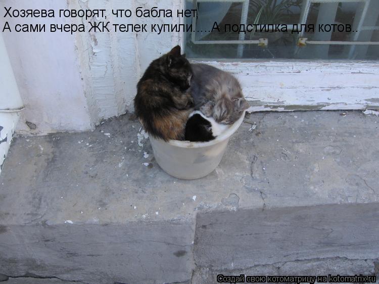 Котоматрица: Хозяева говорят, что бабла нет, Хозяева говорят, что бабла нет, А сами вчера ЖК телек купили.....А подстилка для котов..