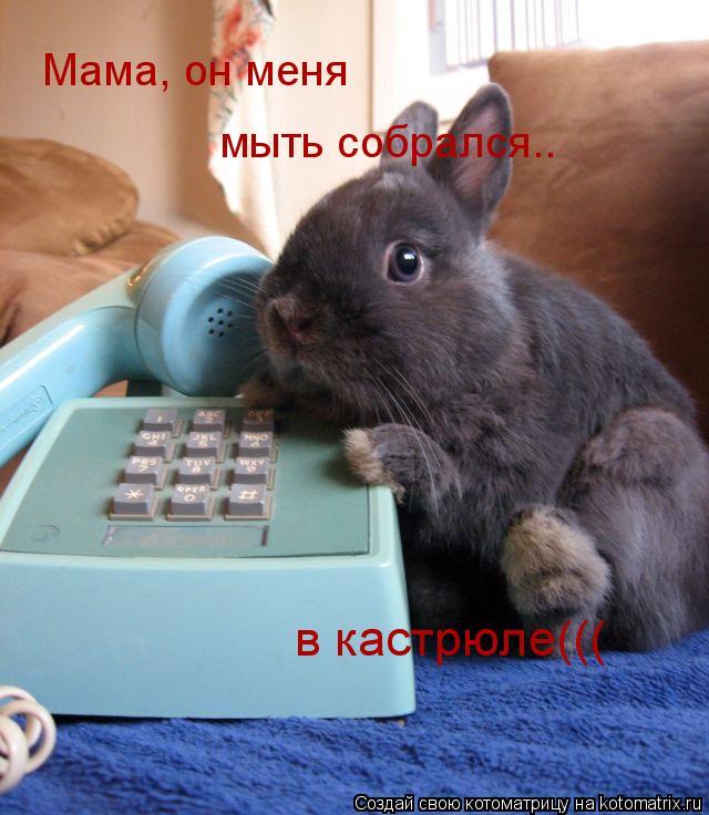 Котоматрица: Мама, он меня мыть собрался.. в кастрюле(((