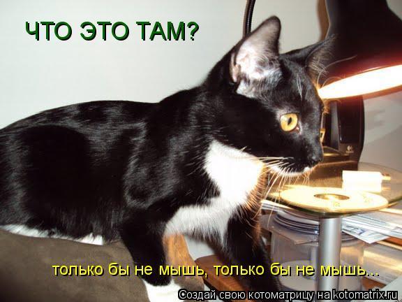 Котоматрица: ЧТО ЭТО ТАМ?  только бы не мышь, только бы не мышь...