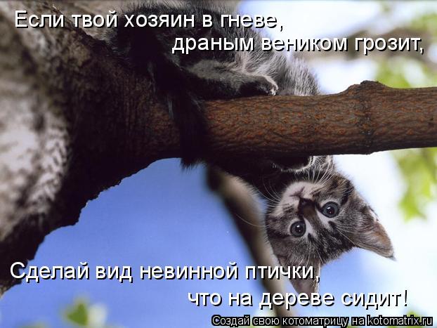 Котоматрица: Если твой хозяин в гневе, драным веником грозит, Сделай вид невинной птички, что на дереве сидит!