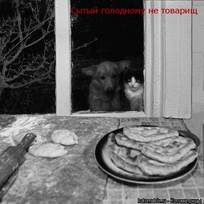 Котоматрица: Сытый голодному не товарищ