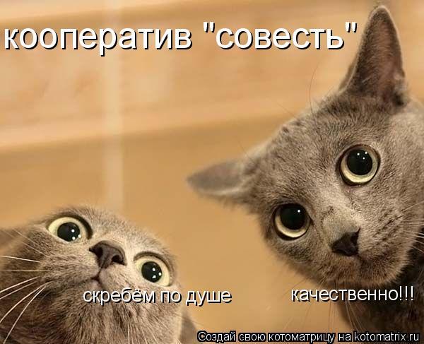 """Котоматрица: скребём по душе качественно!!! кооператив """"совесть"""""""