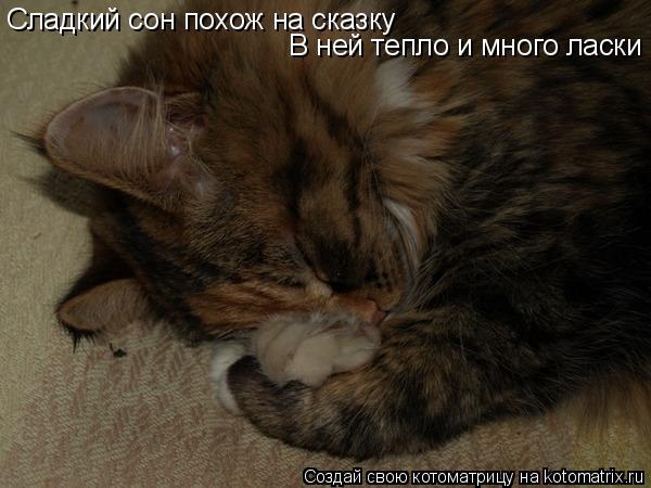 Котоматрица: Сладкий сон похож на сказку  В ней тепло и много ласки