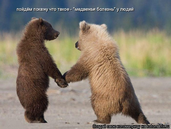 """Котоматрица: пойдём покажу что такое - """"медвежья болезнь"""" у людей"""