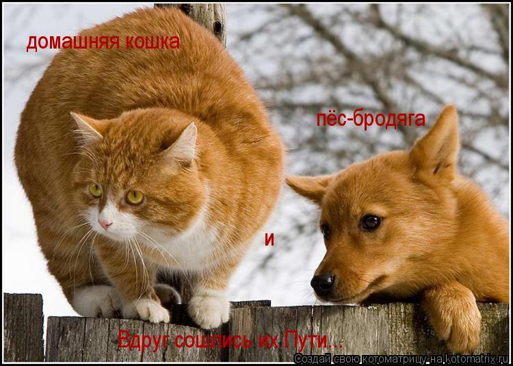 Котоматрица: пёс-бродяга  и домашняя кошка Вдруг сошлись их Пути...