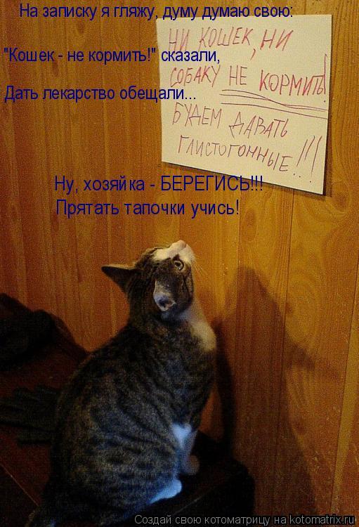 "Котоматрица: На записку я гляжу, думу думаю свою: ""Кошек - не кормить!"" сказали, Дать лекарство обещали... Ну, хозяйка - БЕРЕГИСЬ!!! Прятать тапочки учись!"