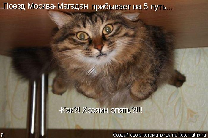 Котоматрица: Поезд Москва-Магадан прибывает на 5 путь... -Как?! Хозяин,опять?!!!