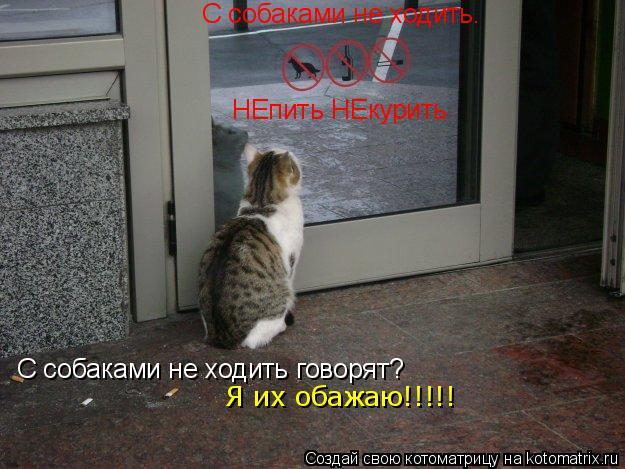 Котоматрица: НЕпить НЕкурить С собаками не ходить. С собаками не ходить говорят? Я их обажаю!!!!!
