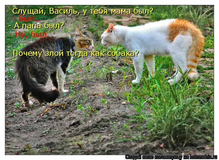 Котоматрица: - Слущай, Василь, у тебя мама был? - Был.. - А папа был? - Ну, был - Почему злой тогда как собака?