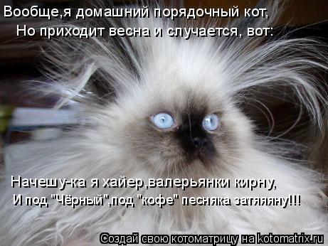 """Котоматрица: Вообще,я домашний порядочный кот, Но приходит весна и случается, вот: Начешу-ка я хайер,валерьянки кирну, И под """"Чёрный"""",под """"кофе"""" песняка зат"""