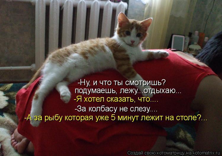 Котоматрица: -Ну, и что ты смотришь? подумаешь, лежу...отдыхаю... -За колбасу не слезу.... -Я хотел сказать, что.... -А за рыбу которая уже 5 минут лежит на столе?