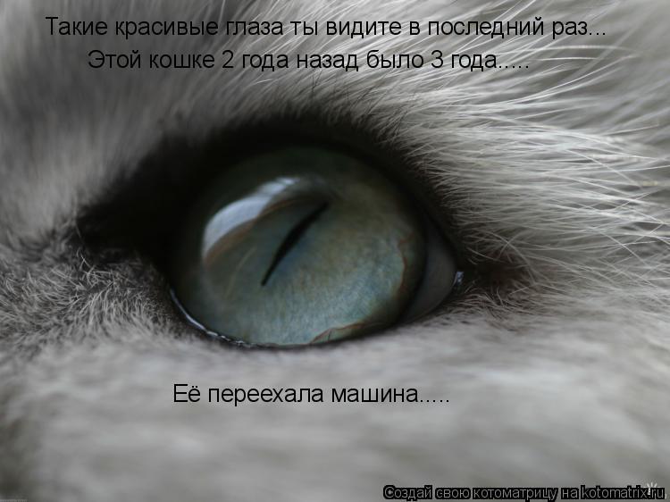 Котоматрица: Такие красивые глаза ты видите в последний раз... Этой кошке 2 года назад было 3 года..... Её переехала машина.....