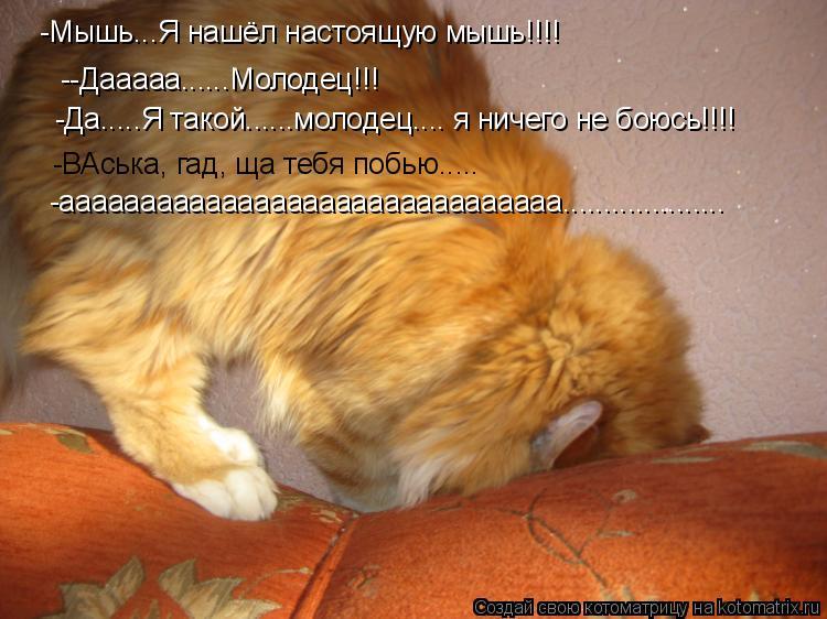 Котоматрица: --Дааааа......Молодец!!! -Мышь...Я нашёл настоящую мышь!!!! -Да.....Я такой......молодец.... я ничего не боюсь!!!! -ВАська, гад, ща тебя побью..... -а