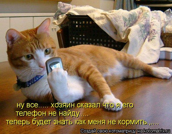 Котоматрица: ну все..... хозяин сказал что я его телефон не найду..... теперь будет знать как меня не кормить.,....