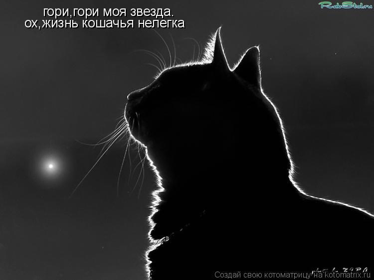 Котоматрица: гори,гори моя звезда. ох,жизнь кошачья нелегка
