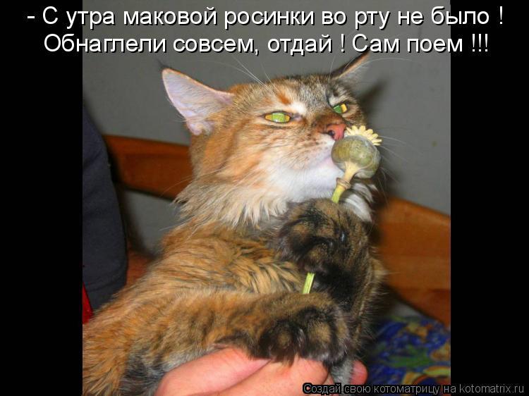 Котоматрица: - С утра маковой росинки во рту не было ! Обнаглели совсем, отдай ! Сам поем !!!