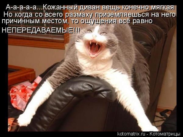 Котоматрица: А-а-а-а-а...Кожанный диван вещь конечно мягкая Но когда со всего размаху приземляешься на него причинным местом, то ощущения всё равно НЕПЕРЕ