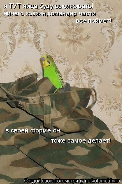 Котоматрица: ничего,хозяин,командир части все поймет! в своей форме он тоже самое делает! я ТУТ яйца буду высиживать!